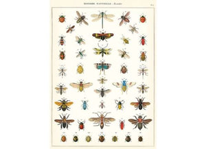 Vintage Style Poster Insects