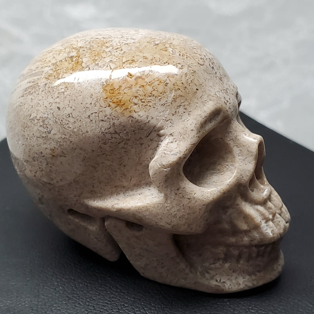 "2"" Fossilized Coral Anatomical Skull"
