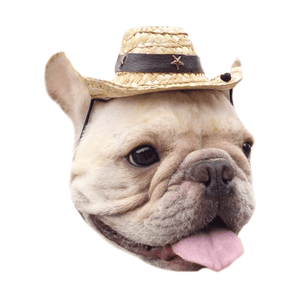 Accessory Straw Cow boy hat with Pu Leather Star rivet for Pet or Cat Use - Frenchic