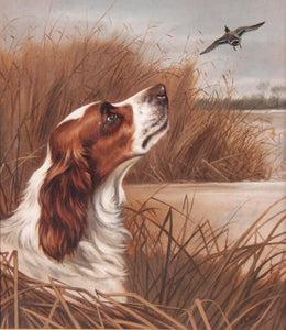 Springer Spaniel dog flushing a duck, landscape oil - signed J A Wheeler