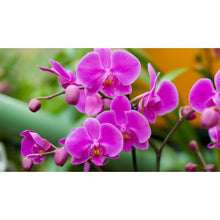 Flower Cutter Large Moth Phalaenopsis Orchid, 3pc Set - Art Is In Cakes, Bakery & SupplyFlower making toolsDefault Title