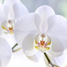 Flower Cutter Phalaenopsis Orchid, 3pc Set - Art Is In Cakes, Bakery & SupplyFlower making toolsDefault Title