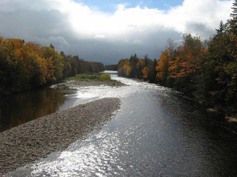 Margaree River in Fall