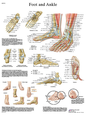 Anatomical Chart - foot and ankle