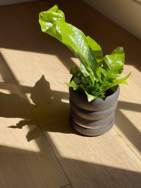 Tombolo Planter by Salamat Ceramics