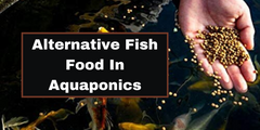 Alternative Fish Food in Aquaponics