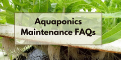 Aquaponics Maintenance FAQs
