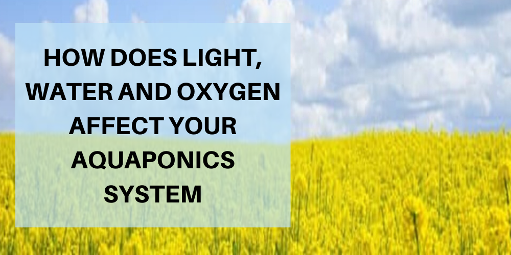 How Does Light, Water, and Oxygen Affect Your Aquaponics System?