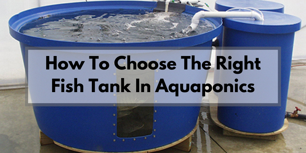 How to Choose the Right Fish Tank for Aquaponics