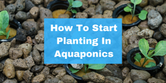 How To Start Planting In Aquaponics