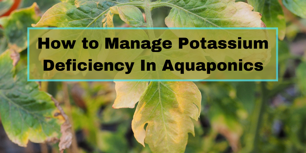 How to Manage Potassium Deficiency In Aquaponics