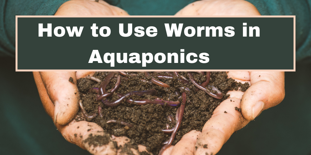 How to Use Worms in Aquaponics