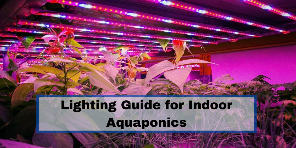 Lighting Guide for Indoor Aquaponics