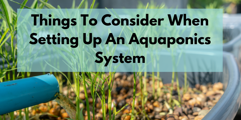 Things To Consider When Setting Up An Aquaponics System