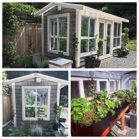 DIY Greenhouse Built From Reclaimed Windows and Doors