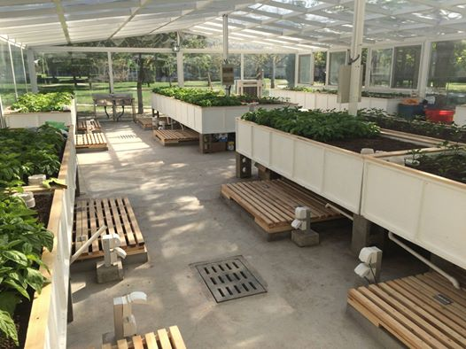 Commercial Aquaponics System in China