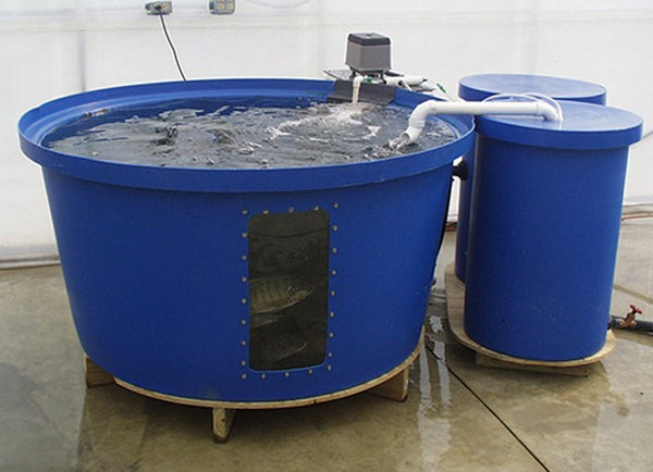 Raft System of Aquaponics Fish Tank