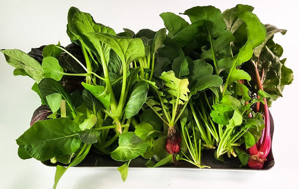 Green Leafy Vegetables in Aquaponics