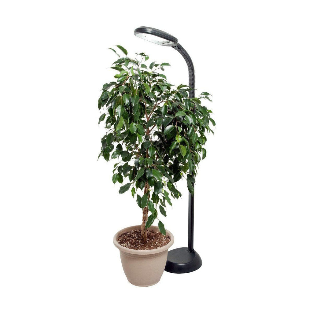 AgroBrite Standing Plant Light w/ 27W CFL - Aquaponics For Life