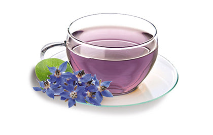 Borage Tea Benefits