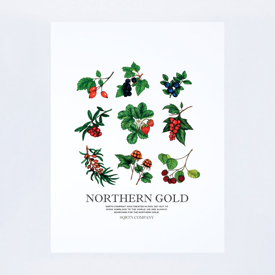 POSTER NORTHERN GOLD