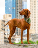 Salt (Green) - Mutt Cloth Dog Bandana