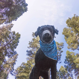 Schools (Atlantic) - Mutt Cloth Dog Bandana