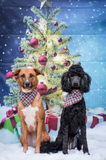 Yuletide - Mutt Cloth Dog Bandana