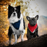 Nightfall - Mutt Cloth Dog Bandana