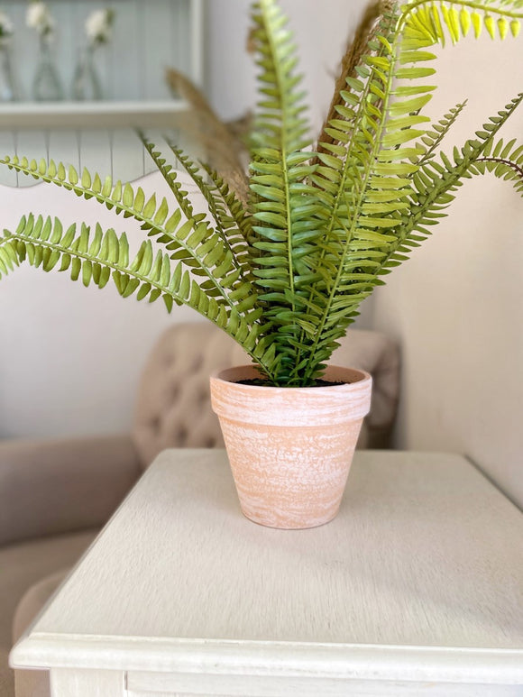 Potted Fern WAS £21.99