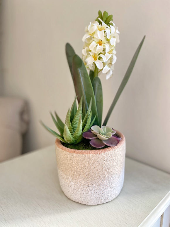 Potted Hyacinth WAS £18.99