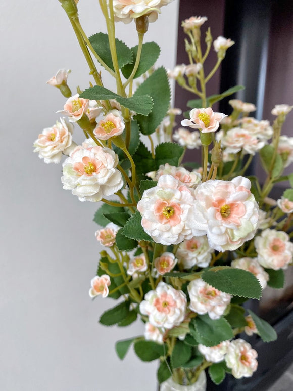 Cream Wild Meadow Rose