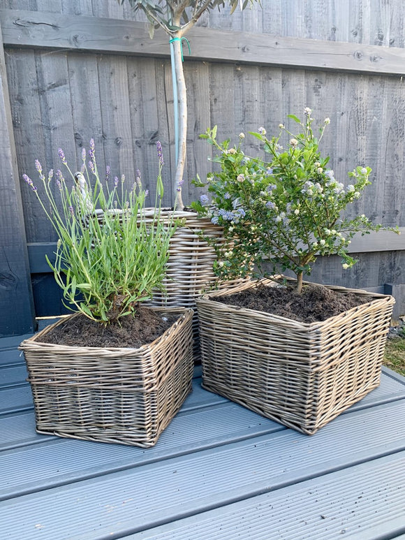 Square Willow Planter - 2 Sizes Available