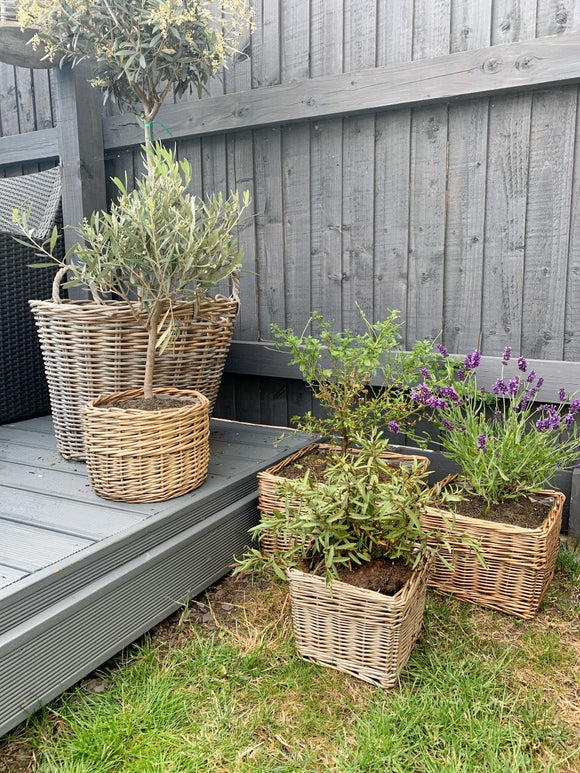 Square Willow Planter - 3 Sizes Available