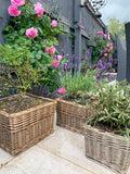 Square Willow Planter WAS £8.50