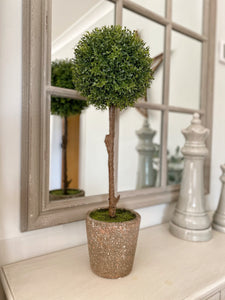 Tall Potted Boxwood