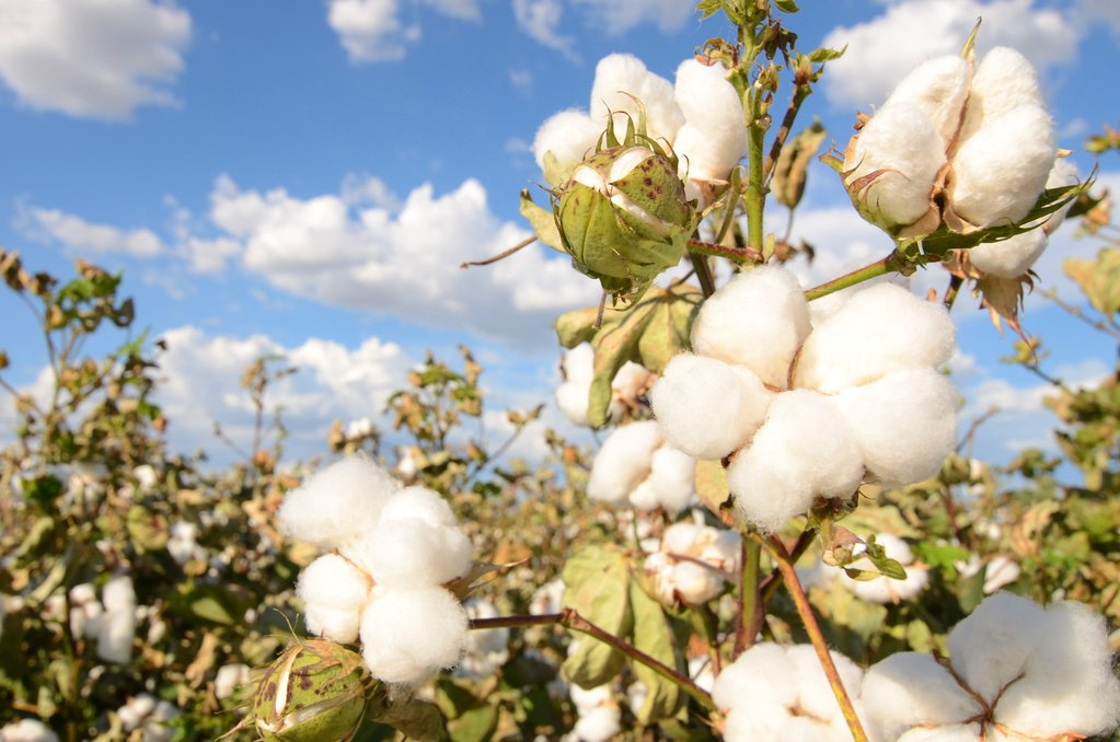 Organic cotton - Why we use it