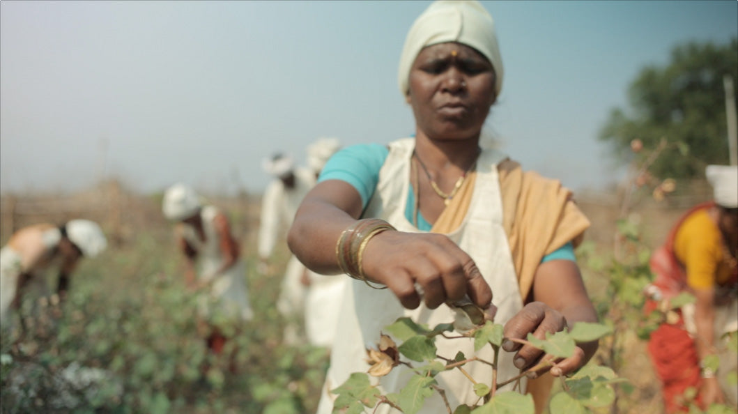 fair trade certified farmer picking organic cotton use for around eco tshirts