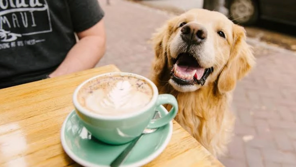 Melbourne_best_dog_cafes_dog_coffee_miso_and_co