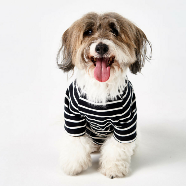 The Timeless Tee - For Dogs