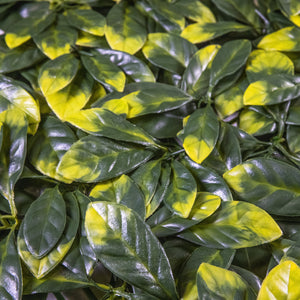 Load image into Gallery viewer, Yellow Tip Osmanthus Leaves (12-Pack) - ColourTree