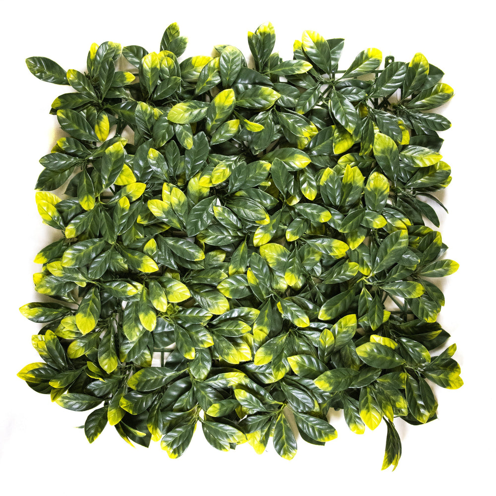 Yellow Tip Osmanthus Leaves (12-Pack) - ColourTree