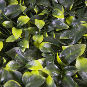 Load image into Gallery viewer, Yellow Tip Gardenia Leaves (12-Pack) - ColourTree