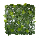 Sweet Potato Leaves (12-Pack) - ColourTree