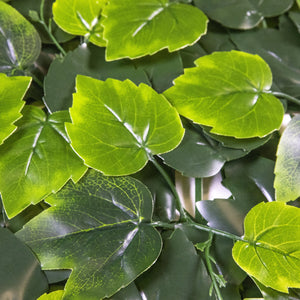 Load image into Gallery viewer, Birch Ivy Leaves (12-Pack) - ColourTree