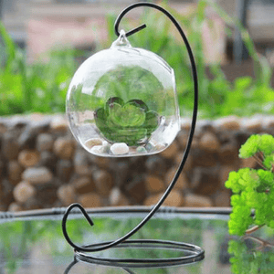 Plant inside of a glass terrarium on a glass desk.
