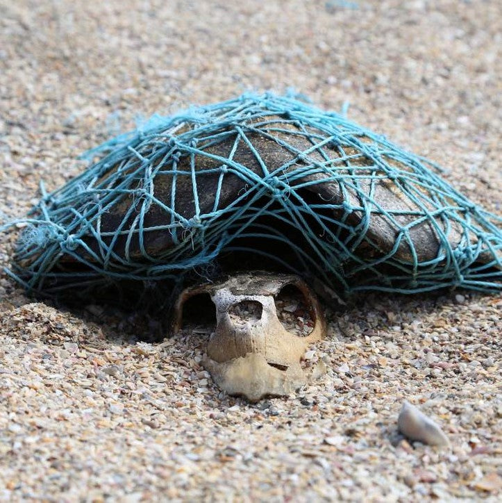 'Ghost netting': Image emerges of decomposed turtle wrapped in plastic net thought to have killed it