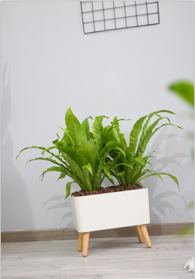 Smart Self Watering Pot with Wooden Legs, Rectangle