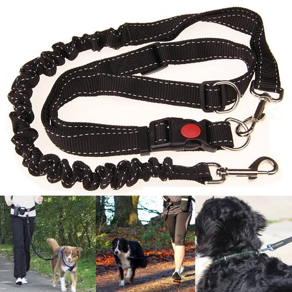 Hands free Elastic Dog Leash