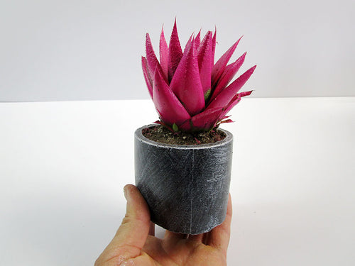 Deorate Your Office Desk With A Concrete Cylindrical Pot, Hand Made. Prefect Gift For Office. FREE SHIPPING!